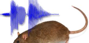 Каким звуком можно отпугнуть крыс из дома