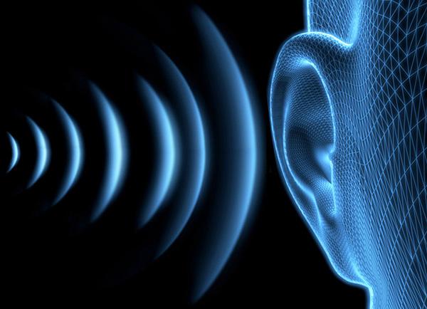 Человеческое ухо практически не способно услышать ультразвук (частотой выше 20000 Гц).