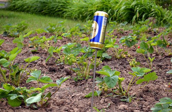 Как избавиться от кротов на дачном участке простым способом: освобождаем сад и дачу своими руками