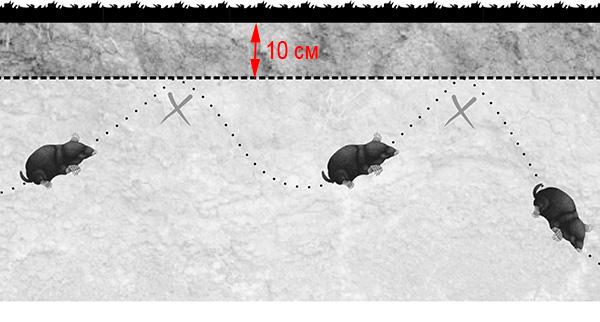 На картинке показан принцип действия антикротовой сетки, уложенной на участке горизонтально.