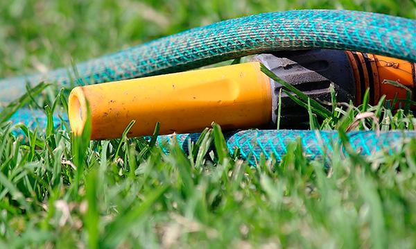 Как правило, обильное заполнение кротовых ходов водой приносит огороду больше вреда, чем пользы.