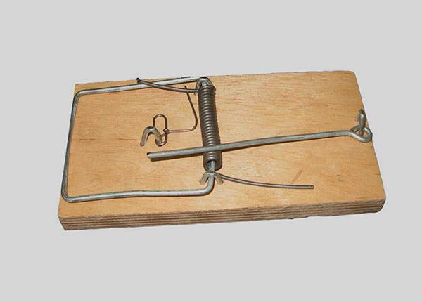 Кротов можно ловить и с помощью стандартных мышеловок.