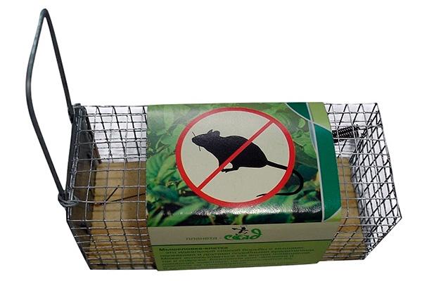 Живоловка - безопасный для кур вариант поимки крыс, однако при ее использовании еще придется думать, что делать с пойманными грызунами.