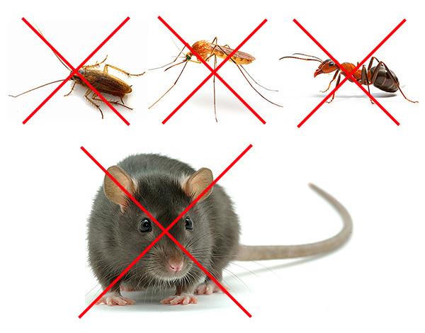 Не стоит рассчитывать на то, что отпугиватель позволит избавиться и от крыс, и от тараканов - это выдумки предприимчивых продавцов.