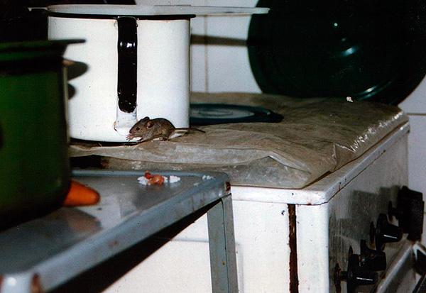 Устройства, не являющиеся ультразвуковыми, как правило, не создают мышам и крысам достаточного дискомфорта.
