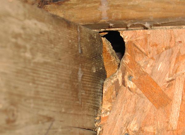 Через такие вот отверстия в дом легко могут проникать новые вредители - важно этого не допустить.