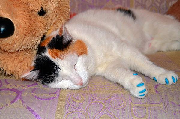 Далеко не все кошки и коты охотятся на крыс...