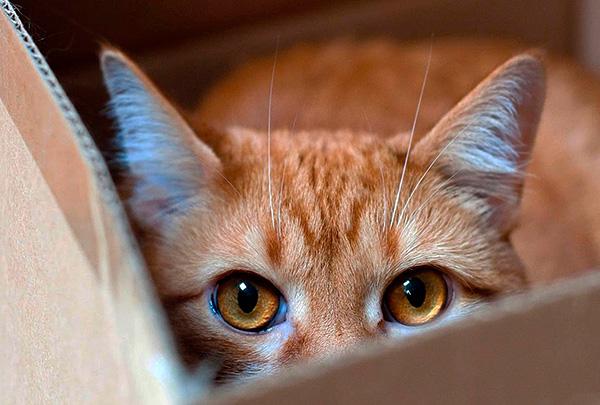 Не стоит забывать, что электронные отпугиватели могут негативно воздействовать не только на крыс и мышей, но и на домашних животных.