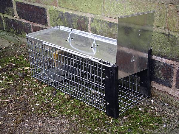 Живоловушка для грызунов
