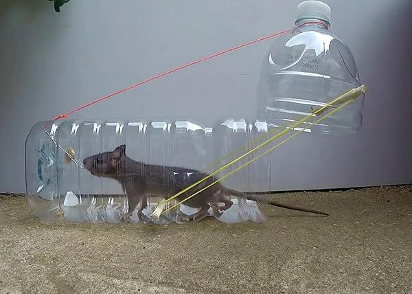 Крысоловка своими руками из бутылки