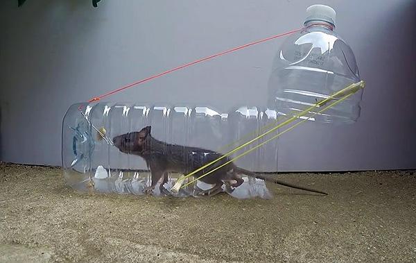 А такую ловушку легко сделать своими руками из обычной пластиковой бутылки.