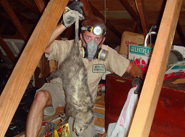 Специалисты службы дератизации сами определят наилучший вариант истребления грызунов на территории.