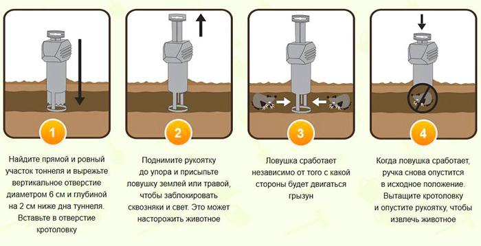 На картинке показана схема установки кротоловки в землю.
