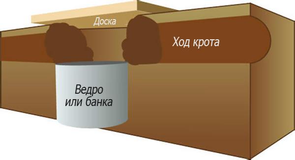Схема кротоловки из банки (или ведра).