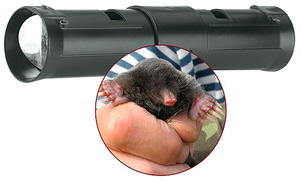 Посмотрим, действительно ли кротоловка-труба эффективна при борьбе с кротами на участке и как правильно устанавливать эту ловушку в подземные ходы зверьков...
