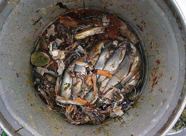 Простой и популярный способ отпугивания кротов - использование тухлой рыбы.