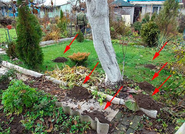 Многим огородникам приходится бороться с кротами уже после того, как на участке будут произведены строительные и посадочные работы, и, конечно, это заметно осложняет борьбу с вредителями.