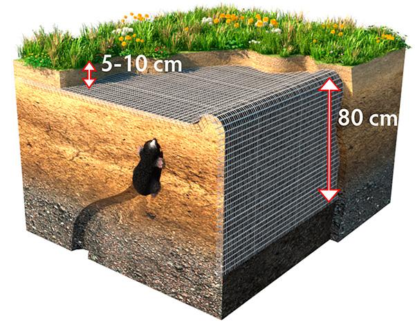 На картинке показано, как нужно использовать сетку от кротов для максимально эффективной защиты дачного участка.