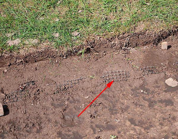 Пример защиты участка от кротов с помощью специальной газонной сетки.