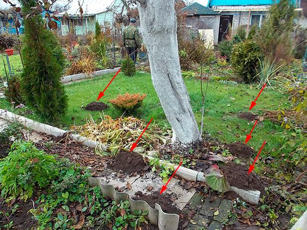 Попробуем разобраться, с помощью каких методов и средств можно надежно избавиться от кротов в огороде...