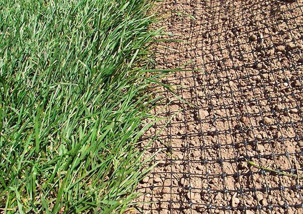 Одним из наиболее надежных способов защиты участка от кротов является применение газонной сетки.