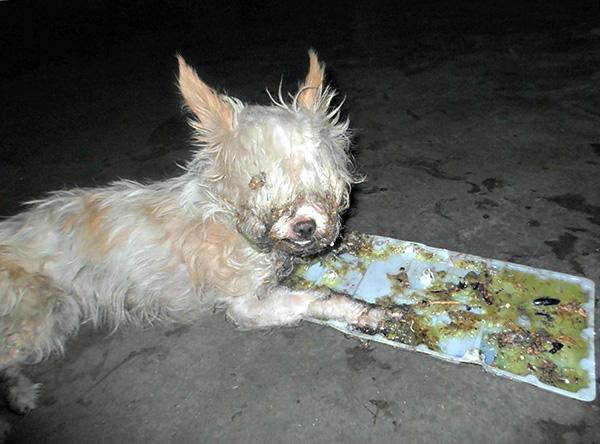 Использование клеевых ловушек от крыс и мышей в доме, где есть дети и домашние животные, может принести немало проблем.