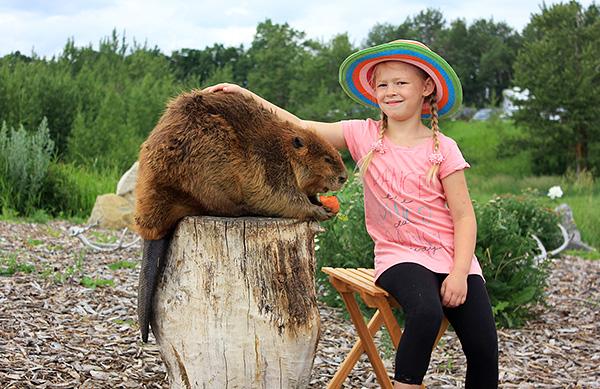 Бобр - тоже достаточно крупный грызун, масса которого может достигать более 30 килограммов.