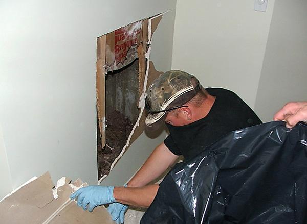 Крысы могут погибнуть от воздействия отравы в труднодоступных местах, например, за стенами и под полом, и вызвать при разложении сильный трупный запах.