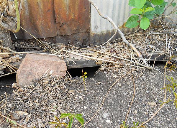 Средство следует располагать в местах появления крысиного помета, а также возле нор и щелей, через которые крысы и мыши могут проникнуть в помещение.