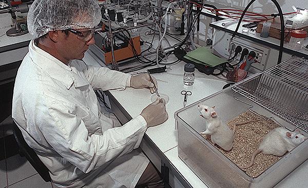 Лабораторные крысы являются одним из главных объектов для проведения опытов в различных областях науки и медицины.