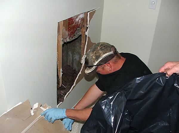 Крысы и мыши могут погибнуть от действия яда в труднодоступных местах (например, под полом и за стенами) - и вызвать появление трупного запаха в помещении.