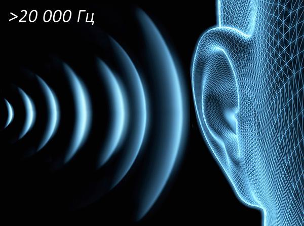 Ультразвуковые колебания имеют частоту свыше 20 кГц и в абсолютном большинстве случаев не воспринимаются ухом человека.