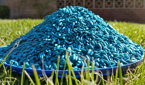 Отравленное зерно - еще один распространенный вариант отравы для грызунов.