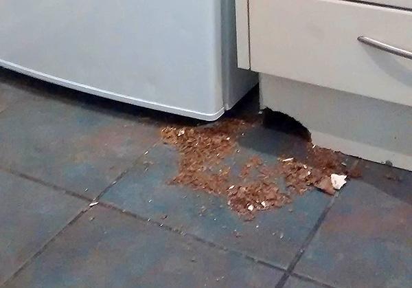 Многие народные средства, к сожалению, не оказывают на крыс и мышей в доме практически никакого отпугивающего воздействия (и, к тому же, некоторые опасны в использовании).
