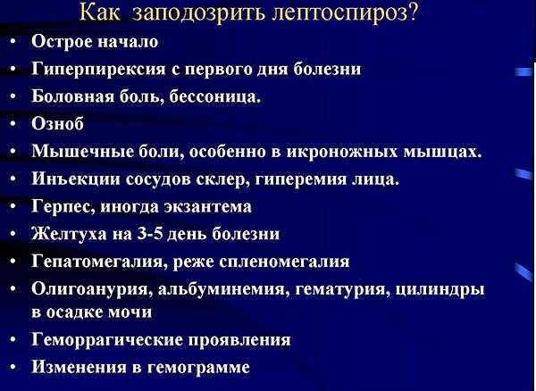 Симптомы лептоспироза