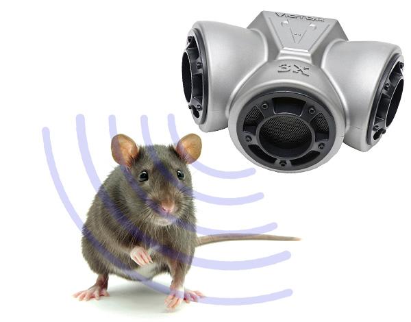 Ультразвук действительно позволяет отпугнуть крыс и мышей, однако есть ряд важных нюансов, которые не всегда учитываются на практике...